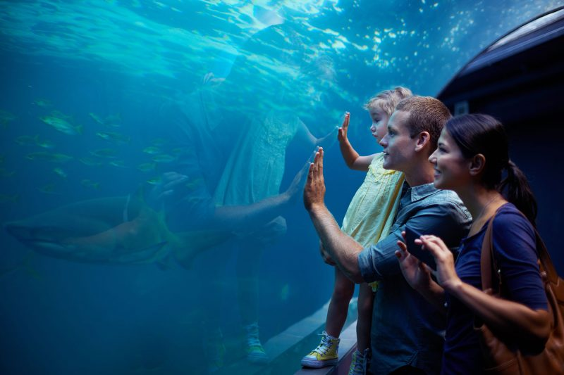 Familie in Aquarium